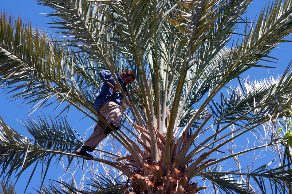 Skoura-palmeraie-morocco-excursions