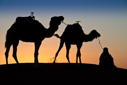 Desert Camel Rides